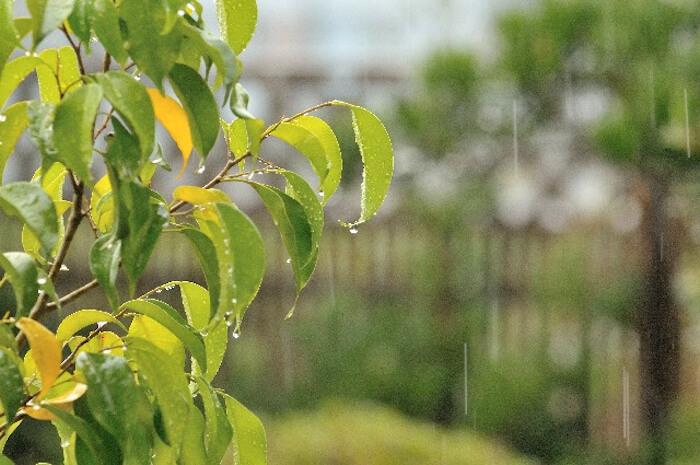50s-menopause-rainy-season-poor-health-meteorotropic-disease05
