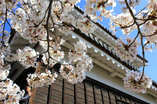sanada-round-masayuki-sanada-nobushige-sanada-yukimura-nobuyuki-sanada-two-selection-3-people-standin03