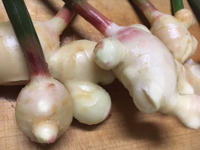 ginger-harvest-of-home-garden-october16
